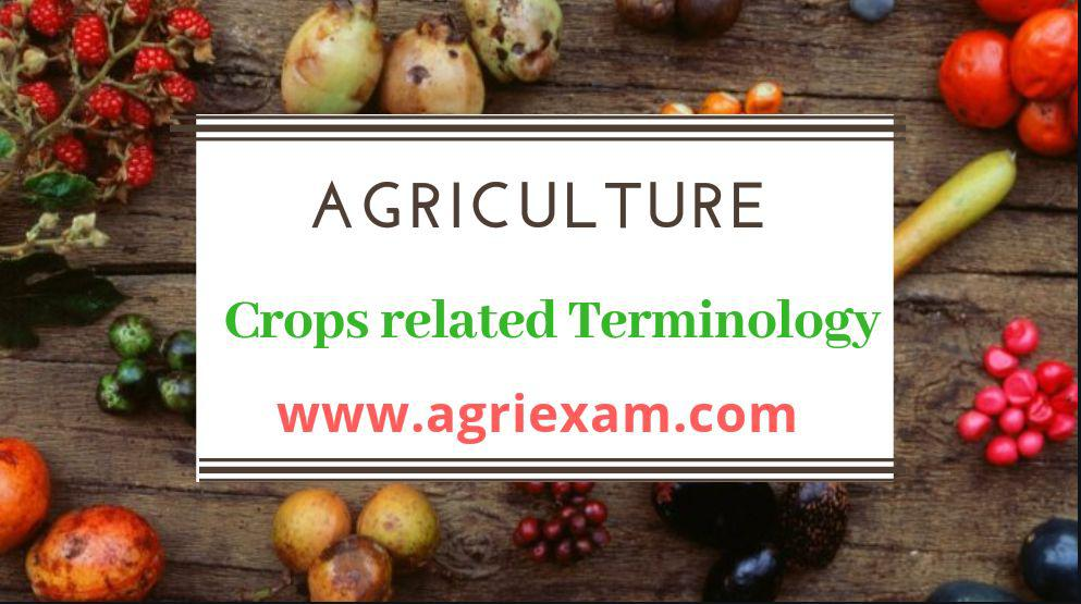 Crops related terminology Groundnut, Jute, Gram, Banana and Sugarcane, Potato and Sugarcane, sunflower, Tomato, Tobacco and Tea, Paddy, Maize
